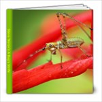 A Bug s Strife - 8x8 Photo Book (20 pages)