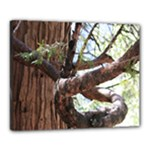 yosemite tree - Canvas 20  x 16  (Stretched)