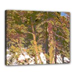 yosemite trees - Canvas 20  x 16  (Stretched)