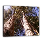 yosemite tree view - Canvas 20  x 16  (Stretched)