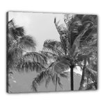 palm trees 1 bw - Canvas 24  x 20  (Stretched)