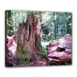 Cathedral Grove 2 16X20 Canvas - Canvas 20  x 16  (Stretched)