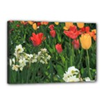 12x18 Tulips - Canvas 18  x 12  (Stretched)