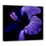 Hibiscus flower tropical - Canvas 24  x 20  (Stretched)