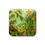 Paleozooic Plants - Rubber Coaster (Square)