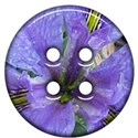jThompson_iris_button1