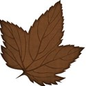jss_happyfallyall_leaf 1 brown