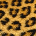 BIG Leopardo