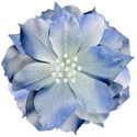 flower blue pearl