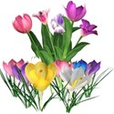 sp_easter_tulipgroup1