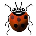orange lady bug