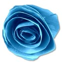 paperflowerblue