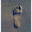 footprint on the beach background