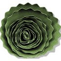 Rolled flower green
