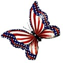 red white and blue butterfly