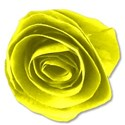 paperfloweryellow