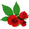 Roses Sticker 01