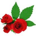 Roses Sticker 02