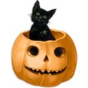 Black Cat in Pumpkin copy