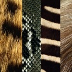 Animal  Skin Background