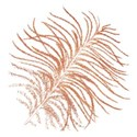 feather orange