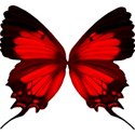 red butterfly2